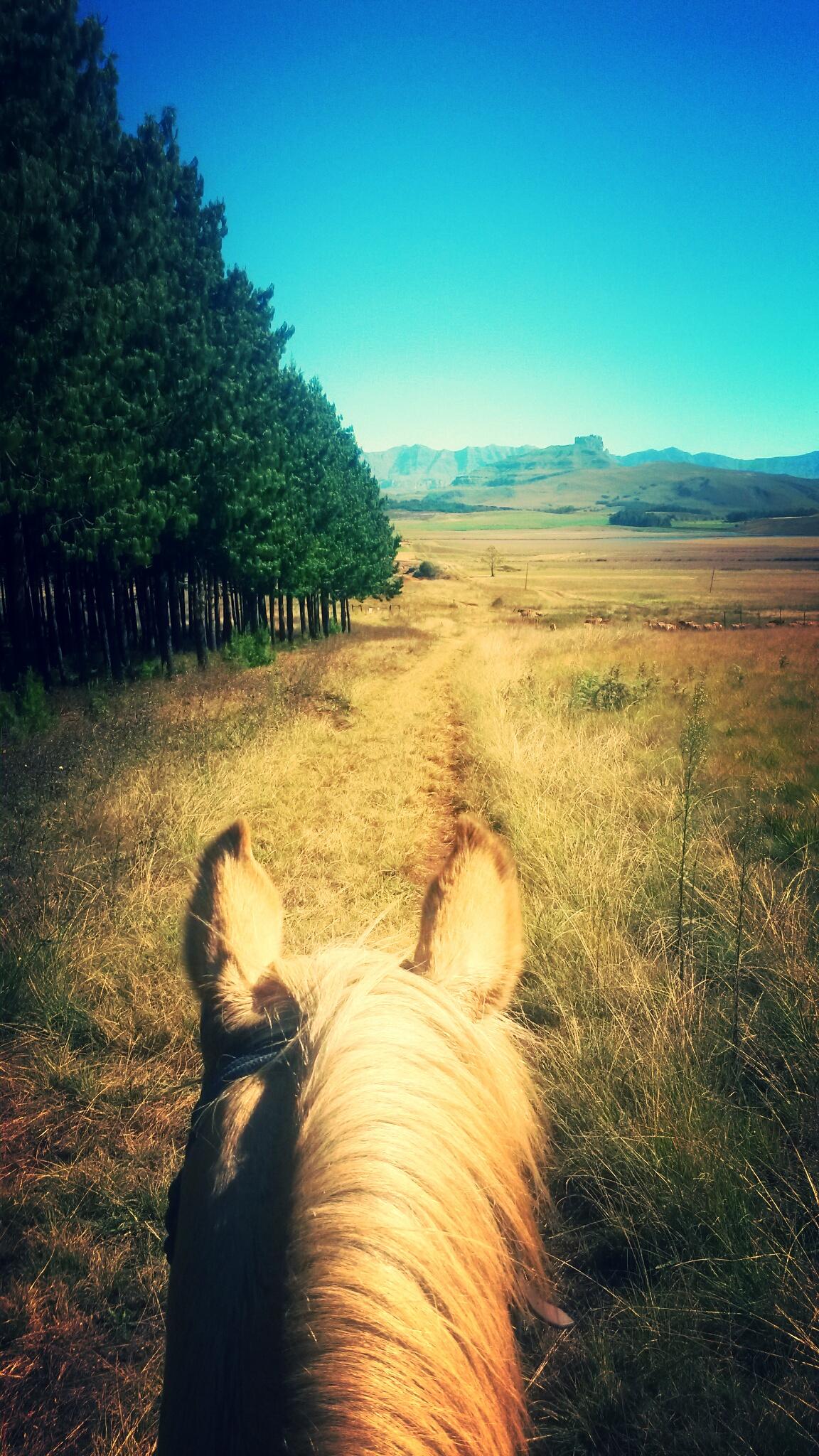 Dragons Landing Horse Trails